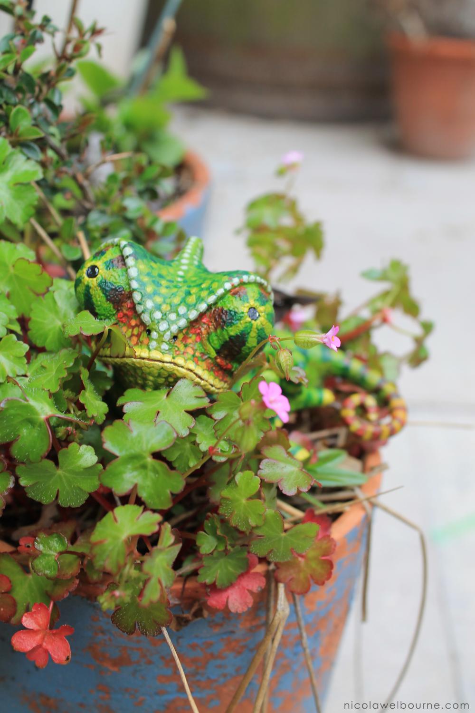 Chameleon Plants